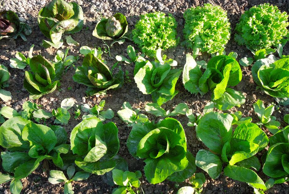 Casarovelli garden products